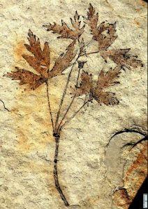 fossil flower_2