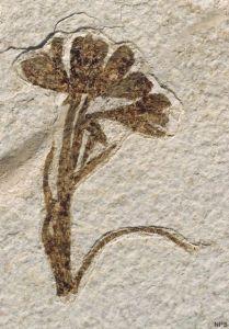 fossil-plant-3-lg_2