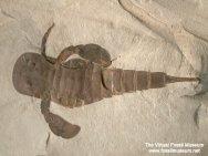 Eurypterus-remipes-t