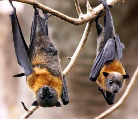 bat_demo_1