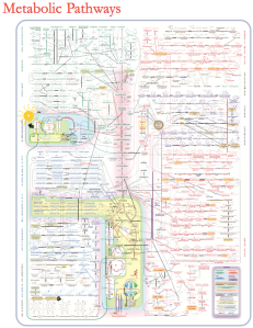metabolic-pathways1