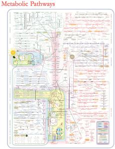 metabolic-pathways1