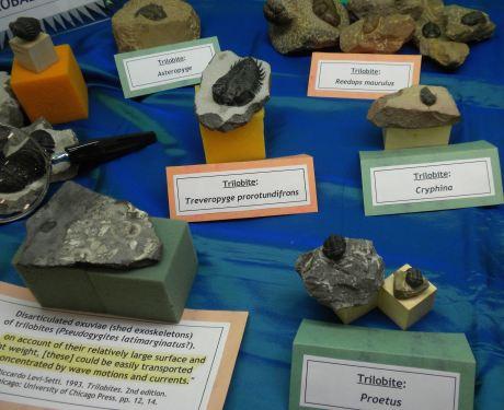 Trilobites10