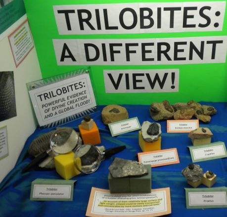 Trilobites2