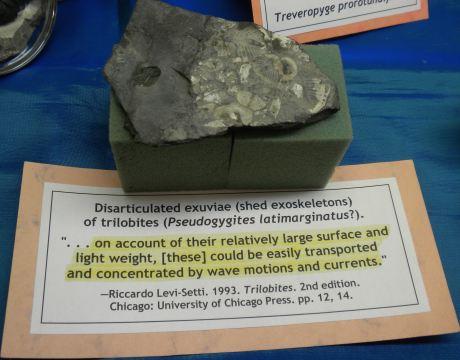 Trilobites9